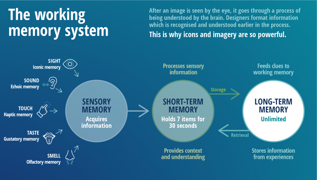 The sensory memory acquires information, which is fed through to the short-term memory, and in turn the long term memory
